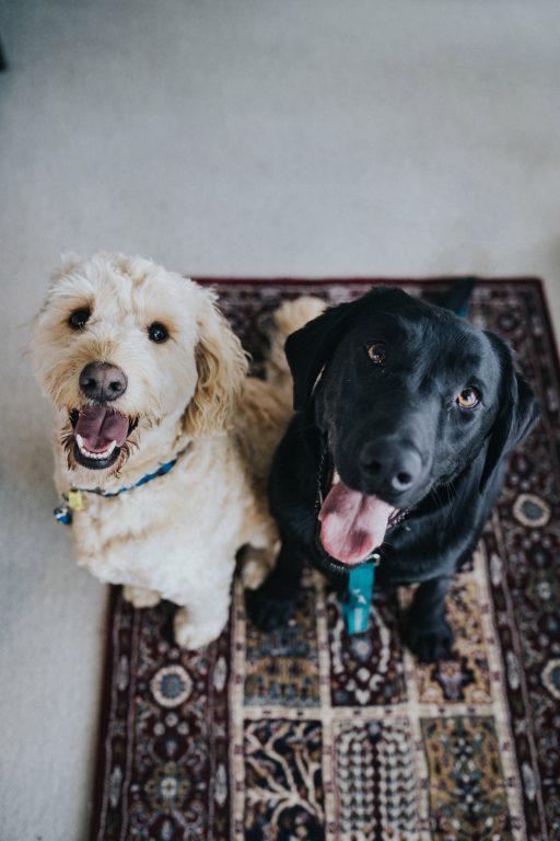 pet insurance FAQs