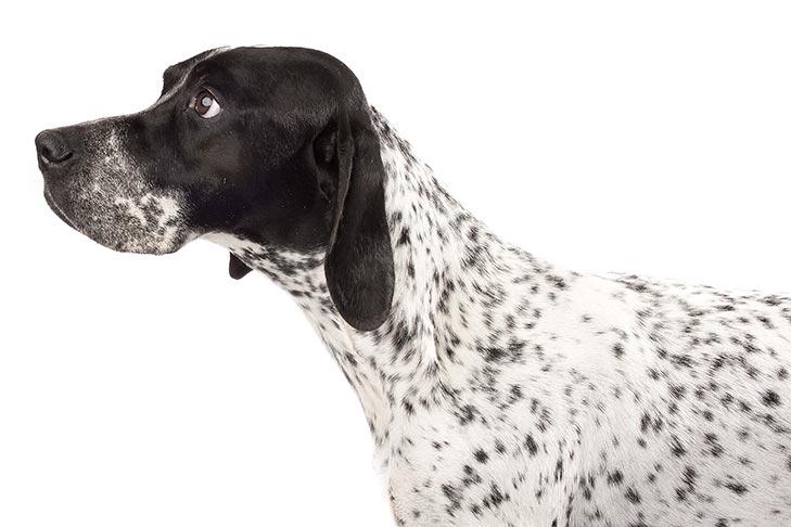 Pointers pet insurance