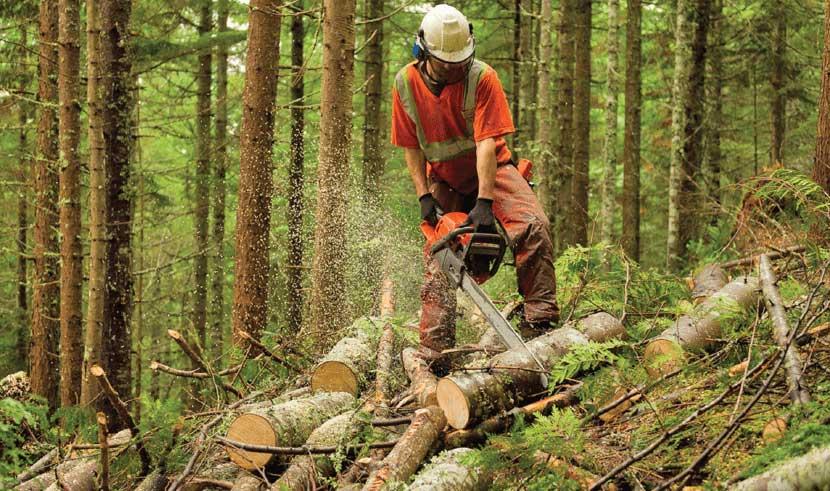 Loggers Job Image