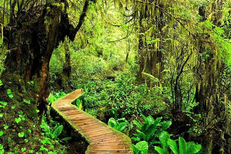 rainforrest view image