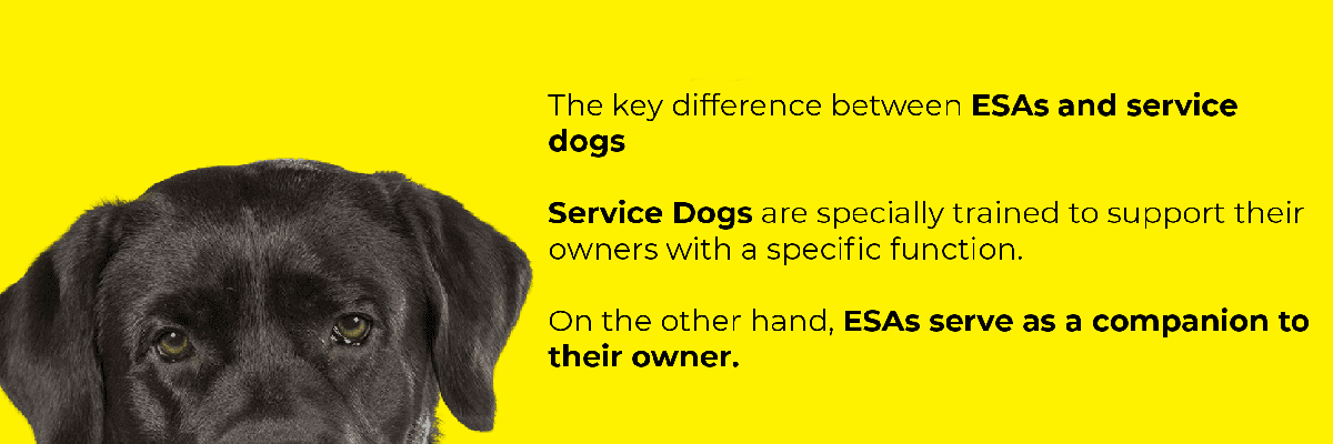 Service Dog Difference Image