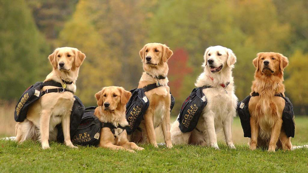 Service Dogs Image