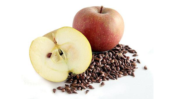 appleseed size fetal development