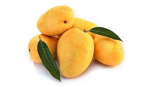 Mango Size Fetal Development