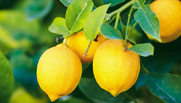 Lemon - food to prevent acne