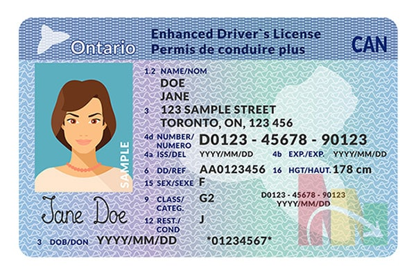 ontario driver license id card lady