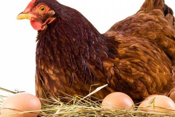 Poultry - foods that prevent hair loss